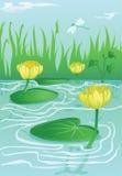 Lillies jaunes de l'eau dans l'eau calme Photos libres de droits