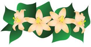 Lillies roses Images libres de droits