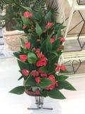 Lillies som är till salu i trädgård, shoppar moscow russia royaltyfri bild