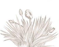 lillies stelladoro Zdjęcie Stock