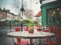 Lillies su una tavola fuori del caffè nell'inverno Fotografie Stock
