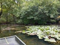 Lillies sur le lac image stock