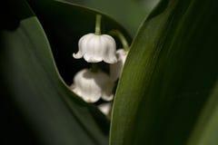 lilliesdal Arkivfoto