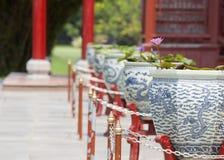 lilly中国人莲花瓷水 库存图片