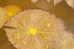 lilly叶子 库存照片