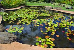 lilly池塘 免版税图库摄影