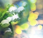lilly谷 免版税图库摄影