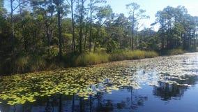 lilly λίμνη στοκ εικόνες με δικαίωμα ελεύθερης χρήσης