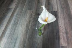 lilly λευκό Στοκ εικόνα με δικαίωμα ελεύθερης χρήσης