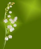 lilly κοιλάδα κλαδίσκων Στοκ Φωτογραφίες