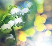 lilly κοιλάδα Στοκ φωτογραφία με δικαίωμα ελεύθερης χρήσης