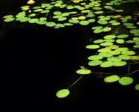 lilly λίμνη μαξιλαριών Στοκ Φωτογραφίες
