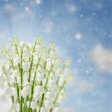 Lilly των λουλουδιών κοιλάδων Στοκ φωτογραφίες με δικαίωμα ελεύθερης χρήσης