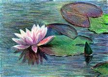 lilly вода иллюстрация штока