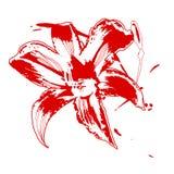 lilly красный цвет иллюстрация штока