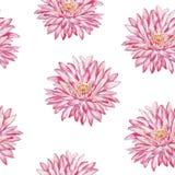 lilly水 水彩无缝的样式 免版税图库摄影