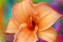 Lilly Stock Photo