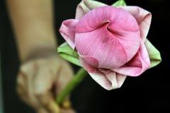 lilly стоковая фотография rf