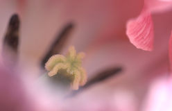 lilly日 库存照片