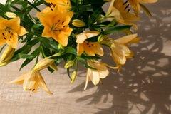 Lilly anaranjado en luz del sol Fotos de archivo libres de regalías