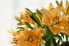 Lilly anaranjado en luz del sol Imágenes de archivo libres de regalías