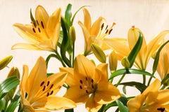 Lilly anaranjado en luz del sol Foto de archivo libre de regalías