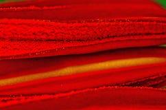 Lilly Anther: Fiume scorrente di rosso immagini stock libere da diritti