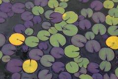 Lilly Auflagen auf einem Teich Stockfotografie