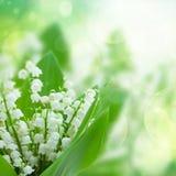 Lilly av dalen blommar tätt upp Royaltyfri Fotografi