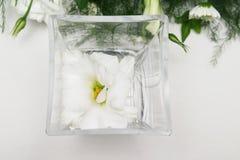 Lilly bianco fotografia stock
