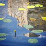 Lilly block och gulingblommor på en flodreflexion Royaltyfri Foto