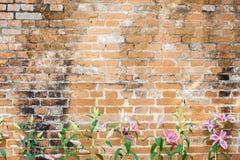 Lilly blomma på tegelstenbakgrund Royaltyfri Foto