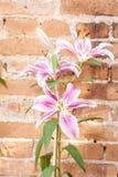 Lilly blomma på tegelstenbakgrund Royaltyfri Bild