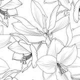 Lilly blommar sömlös modellhippeastrum för closeup stock illustrationer