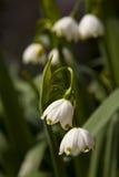 lilly dal Royaltyfri Fotografi