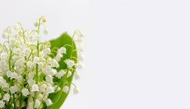Lilly del mazzo dei fiori e delle foglie della valle isolato su fondo bianco fotografia stock