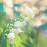 Lilly della valle Fotografia Stock