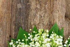 Lilly della valle su legno Fotografia Stock Libera da Diritti
