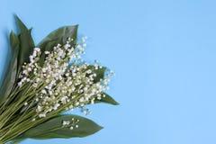 Lilly dolina liści i kwiatów bukiet na błękitnym tle Zdjęcia Royalty Free
