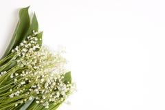 Lilly dolina liści i kwiatów bukiet na białym tle Selekcyjna ostrość Zdjęcia Stock