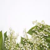 Lilly dolina liści i kwiatów bukiet na białym tle Selekcyjna ostrość zdjęcie stock