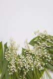 Lilly dolina liści i kwiatów bukiet na białym tle Selekcyjna ostrość Obrazy Royalty Free