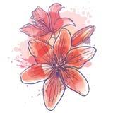 Lilly florece el ejemplo del vector Imagenes de archivo