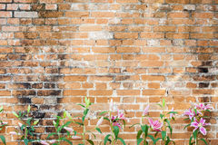 Lilly flower on brick background Royalty Free Stock Photo