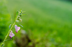 lilly flower bud foliage Stock Photo