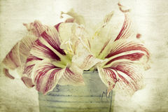 Lilly flowers in a bucket Stock Images