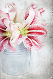 Lilly flowers in a bucket Royalty Free Stock Image