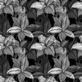 Lilly flowers nature and leaves watercolor seamless pattern background Stock Images