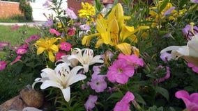 Lilly im Garten Stockbilder