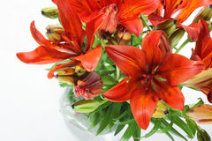 Lilly isolated on white background. Summer flowers Royalty Free Stock Photos